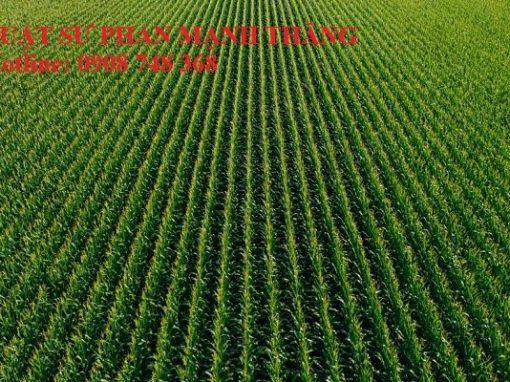 Hình ảnh Đất của mình bị cấp sổ đỏ cho người khác thì phải làm thế nào
