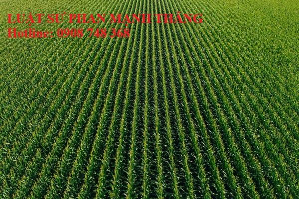 Đất của mình bị cấp sổ cho người khác thì làm thế nào ?